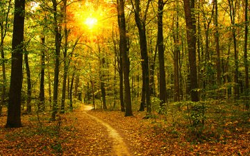 деревья, природа, лес, стволы, осень, тропинка