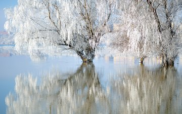 lake, nature, winter, reflection, frost, willow
