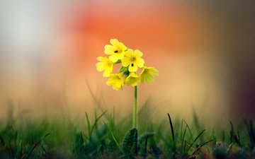 grass, nature, background, flower, bokeh