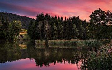 river, nature, forest, sunset, reflection, landscape