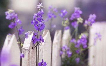 цветы, макро, забор