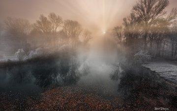 деревья, река, природа, лес, туман, иней