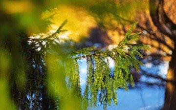 tree, needles, macro, branches, spruce
