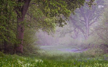 цветы, деревья, природа, лес, парк, весна