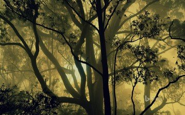 trees, nature, forest, fog, india, karnataka