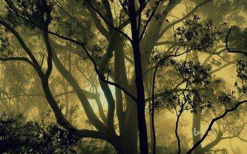 деревья, природа, лес, туман, индия, карнатака
