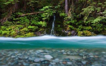 вода, река, природа, ручей, водопад, вашингтон, сша, джунгли, бэкон-крик