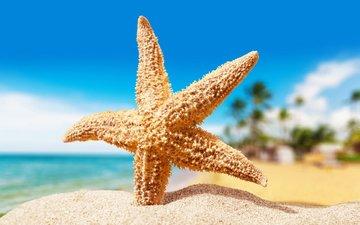 макро, песок, пляж, морская звезда