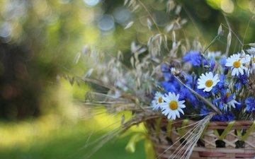 flowers, spikelets, chamomile, basket, cornflowers