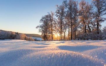деревья, снег, природа, зима, парк