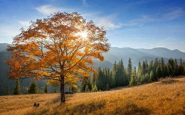 mountains, nature, tree, forest, landscape, autumn