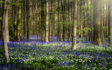 цветы, природа, лес, весна, jean dujardin