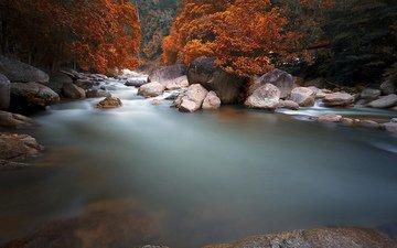 река, природа, пейзаж, кусты, осень