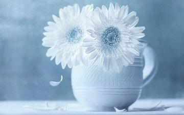 flowers, petals, gerbera, still life