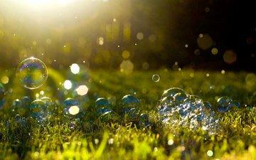 трава, макро, мыльные пузыри