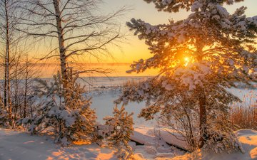 trees, the sun, nature, winter, morning