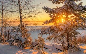 деревья, солнце, природа, зима, утро