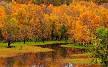 деревья, река, природа, лес, пейзаж, осень