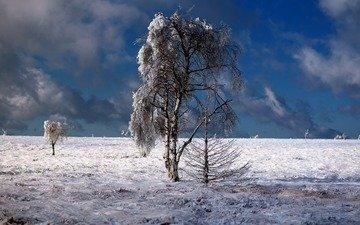 небо, облака, деревья, природа, зима, пейзаж