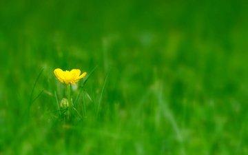 трава, цветок, луг, полянка