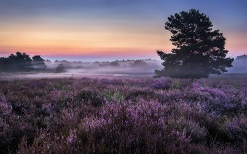flowers, trees, nature, morning, fog, horizon, meadow
