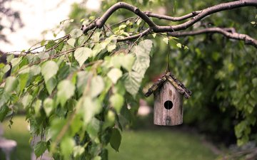 leaves, macro, branches, birch, birdhouse, bird house