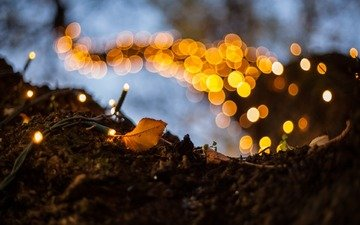 дерево, макро, огоньки, гирлянда, боке