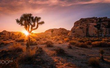горы, природа, пейзаж, утро, каньон