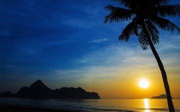 природа, закат, пейзаж, море, пальма