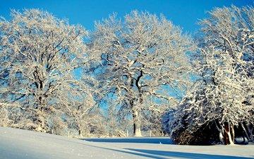 деревья, снег, природа, зима