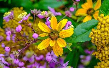 цветы, желтые, полевые цветы, сиреневые