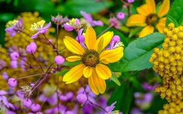 flowers, yellow, wildflowers, lilac