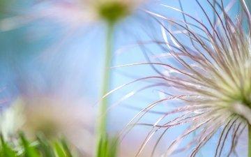 nature, macro, flower, bokeh