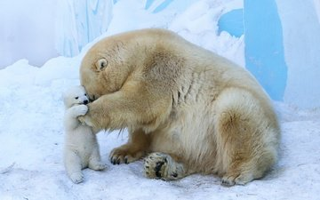 animals, bears, polar bear, zoo, cub