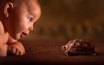 улыбка, черепаха, дети, ребенок, друг, любопытство, знакомство, знакомства
