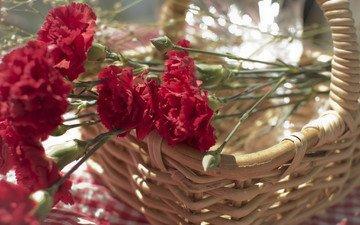 flowers, petals, red, basket, clove