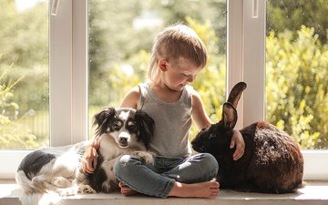 animals, dog, child, rabbit, window, boy, friendship, friends
