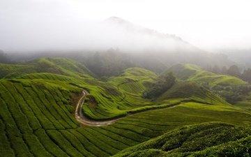 grass, mountains, hills, nature, fog, malaysia, cameron highlands