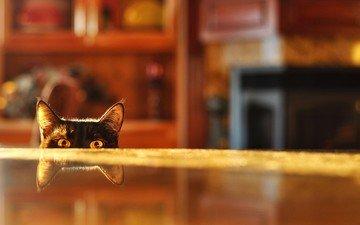 глаза, отражение, кот, мордочка, кошка, взгляд, уши