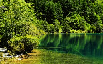 trees, lake, nature, forest, park, summer, china, jiuzhaigou
