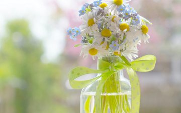 chamomile, forget-me-nots, bottle, ribbon, a bunch, wildflowers, bow, bokeh, braid