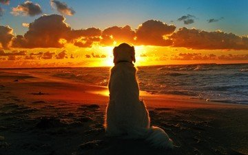 sunset, sea, beach, dog, loneliness, labrador, retriever, golden retriever