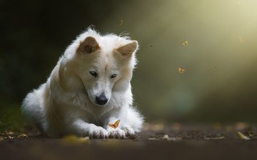 light, nature, dog, butterfly, animal, birgit chytracek