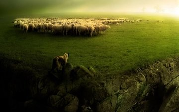 greens, landscape, dog, sheep, the herd, shepherd