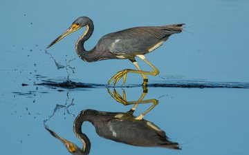 water, reflection, bird, beak, feathers, heron