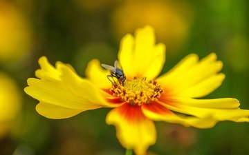 insect, flower, petals, fly