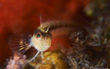 рыбка, рыба, подводный мир, davide lopresti