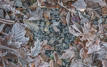 stones, leaves, frost, autumn