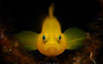 глаза, рыбка, рыба, подводный мир, davide lopresti