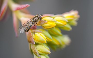 macro, insect, flower, fly, macro. flower